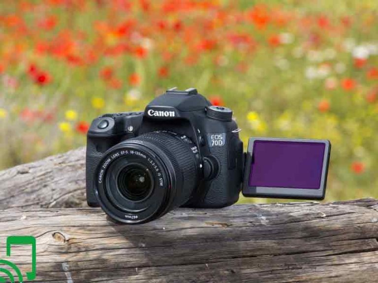 The 7 Best Canon Cameras with Flip Screen